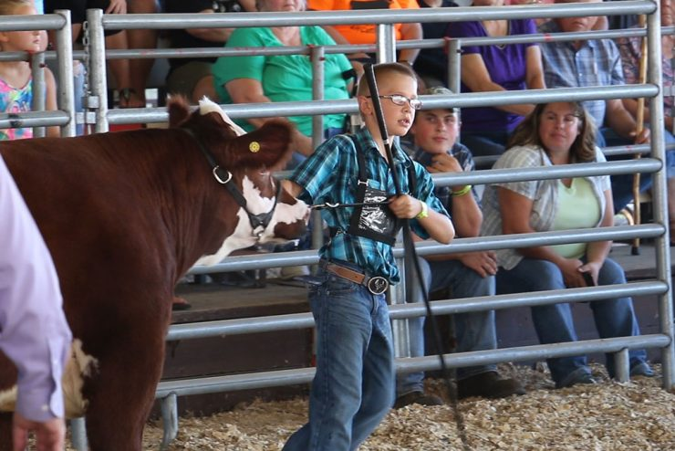 Brothers win Grand Champion, Reserve Steers at U.P. State Fair