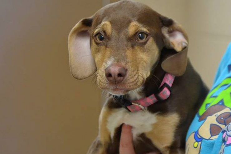 Abused shelter dog credited with saving toddler's life