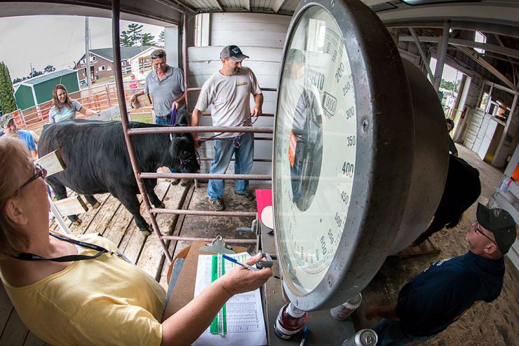 Crazy day as beef cattle is registered at U.P. State Fair