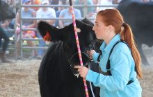 Keeping judge's eye important when showing animals at U.P. State Fair